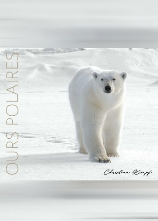 Ours polaires de Christian Kempf